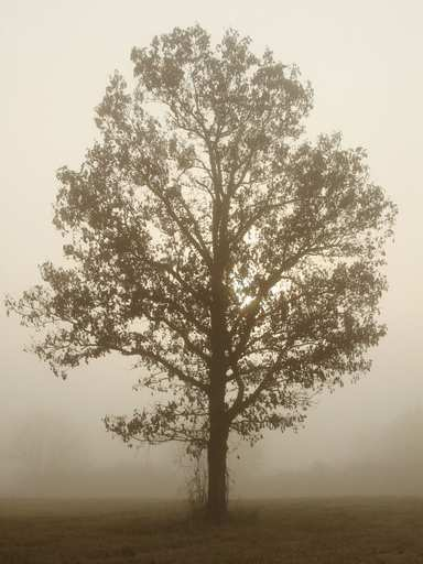 There are few things more peaceful than walking through a field on a foggy morning. I love the anonymity of feeling like you're the only person in the world. This lone tree brings that feeling home for me.