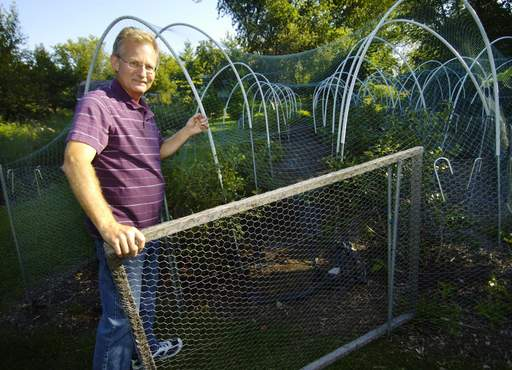 Tom Anderson shows his protective mesh system to keep birds out of his blueberry patch in his Palatine home garden.