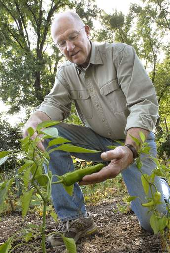 Schaumburg Garden Club member Steve Larson checks on a pepper.