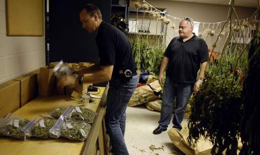 Officer Jason Lentz, left, and Sgt. Jim Lullo show the media the spoils of an Elgin Police bust at four west-side Elgin homes that yielded about 550 marijuana plants and sophisticated growing equipment.