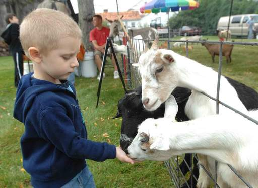 Chris Owens, 3, of Berwyn feeds goats at the petting zoo during Depot Days Saturday in Lisle.