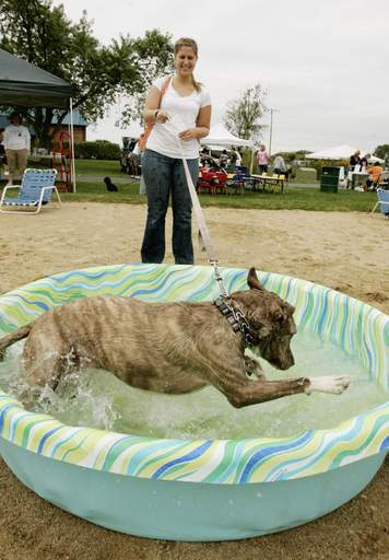 Amanda Rylek of Villa Park watches her dog Lulu having fun in the pool Sunday as part of Bark Fest in Carol Stream.